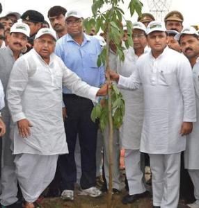 up plant